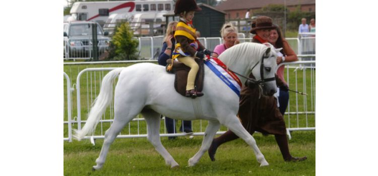 Heniarth Quasar (Roseisle Pandy Tudyr x Sunwillow Quest)