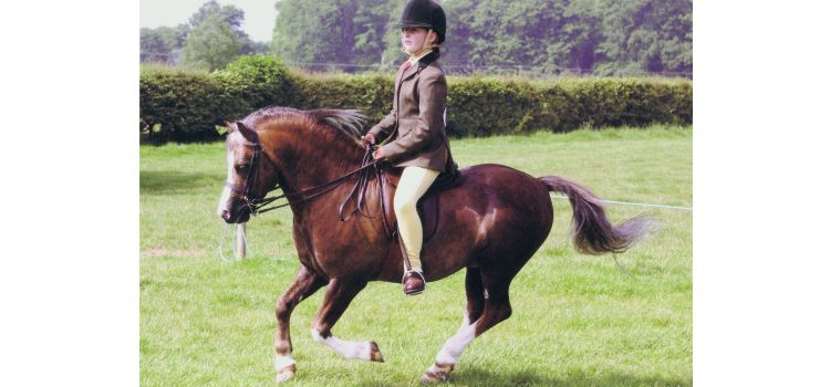 Heniarth Quip, HOYS & Olympia finalist with India Latter
